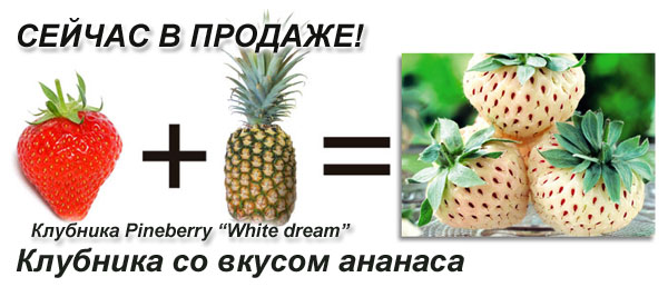 �������� framberry white dream