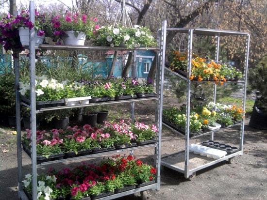 Интернет-магазин, декоративные растения